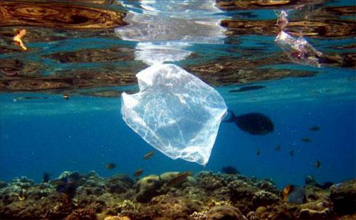 المخلفات البلاستيكية في المحيطات تهدد حياة الطيور البحرية