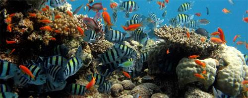 علماء: الحياة البحرية تعاني تدهورا كارثيا