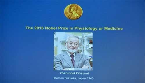 """أبحاث """"الالتهام الذاتي"""" للخلايا تحصد جائزة نوبل للطب"""