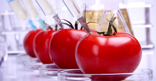 ألمانيا تحظر المحاصيل المعدلة وراثيا