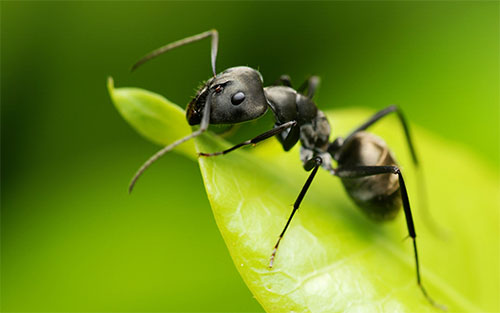 علماء: النمل لديه عقل متطور ويستعين بالذاكرة لتحديد الاتجاه