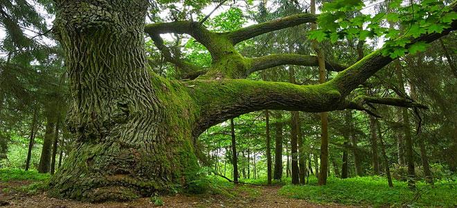 العلماء يحددون أنواع الأشجار العالم tree-s.jpg