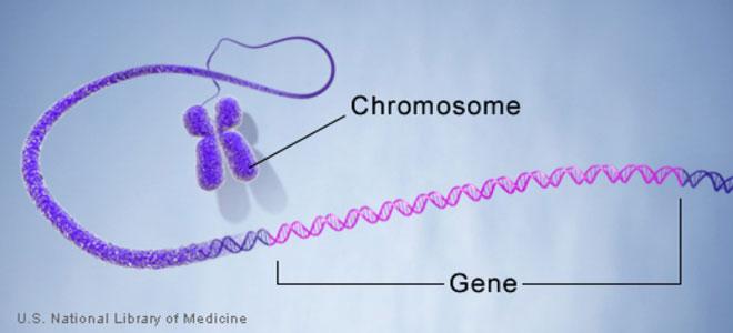 تعديل الجينات لأول مرة في الولايات المتحدة لأغراض علاجية