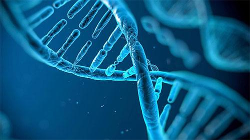 Les bactéries ont des réservoirs pour ranger les gènes qu'elles s'échangent entre elles