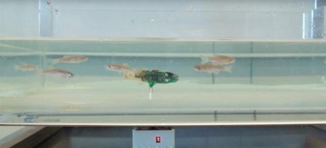 ابتكار سمكة روبوت للتجسس على الأسماك