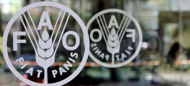 الفاو: زيادة بنسبة 8.2% في أسعار الغذاء في العالم