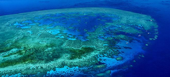 نداء لإنقاذ الحاجز المرجاني الكبير