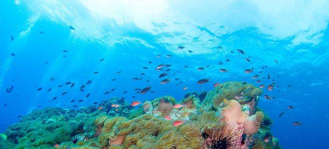 تطوير نظام كوري يسمح بالتنبؤ بتغيرات البيئة البحرية