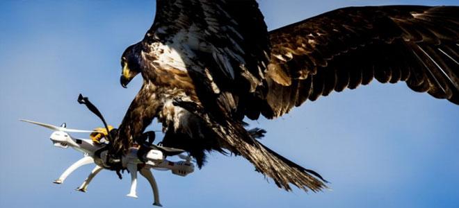 النسور تصطاد الطائرات بدون طيار في سماء جنيف