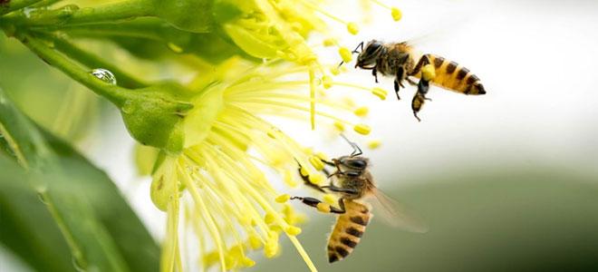 اليوم العالمي للنحل.. منظمة (الفاو): النحل يساعد في الحفاظ على التنوع البيولوجي والنظم الإيكولوجية النابضة بالحياة