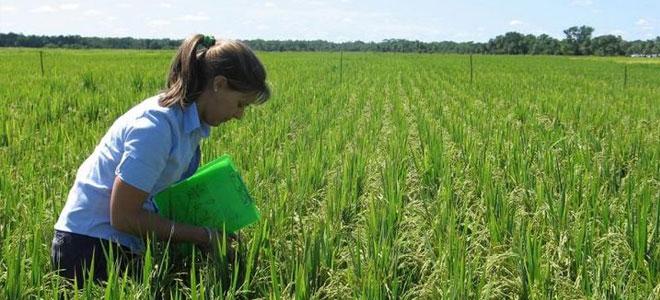 «فاو» تحذّر من ازدياد التحديات أمام تحسين الأمن الغذائي