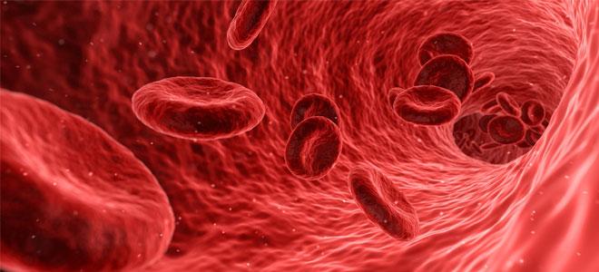 إنتاج بويضات بشرية من خلايا الدم