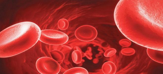 إنتاج بويضات بشرية من خلية دم عبر إحالتها إلى جذعية