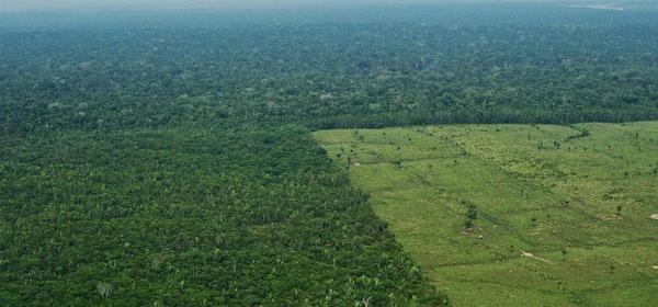 Déforestation au Brésil: L'équivalent d'un million de terrains de foot perdus en un an