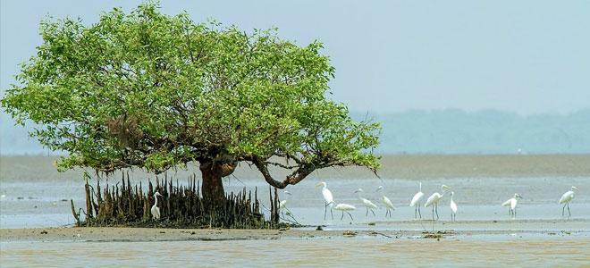 تقرير: فرط الاستهلاك البشري «أباد» الحياة البرية