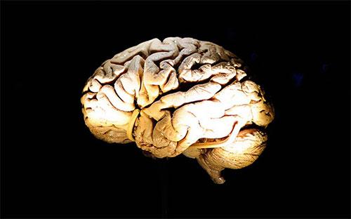 الدماغ يكتمل نضوجه مع بلوغ الأربعين